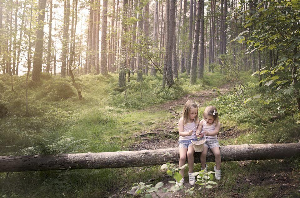 I Blåbærskogen